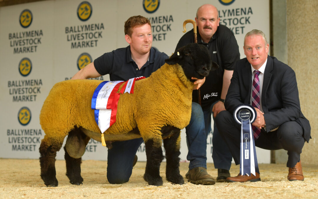 Northern Ireland Branch Premier Export Show and Sale- Ballymena 2019