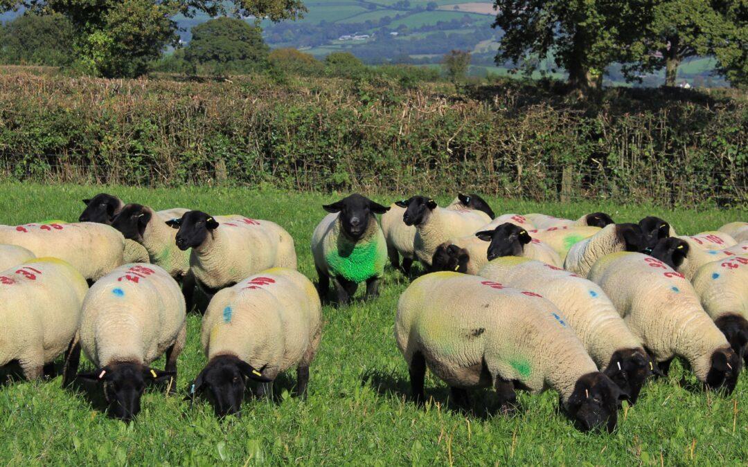 100 Years of Farming in Devon