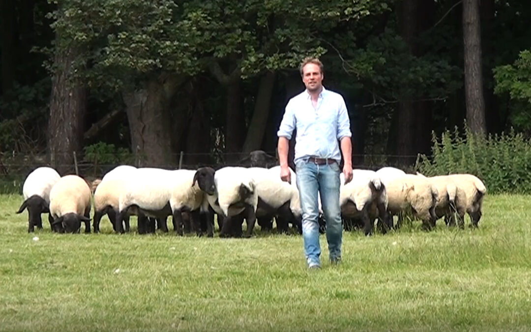 Suffolk sired lambs tick all the boxes