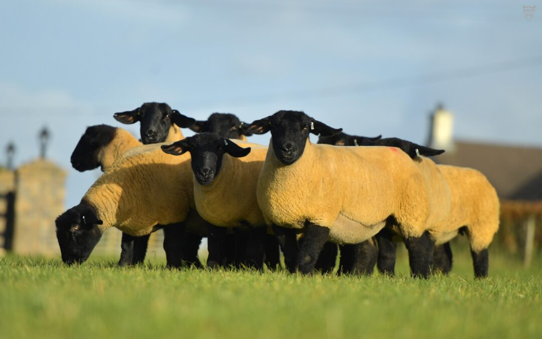 National Flock Competition Entry details 2021