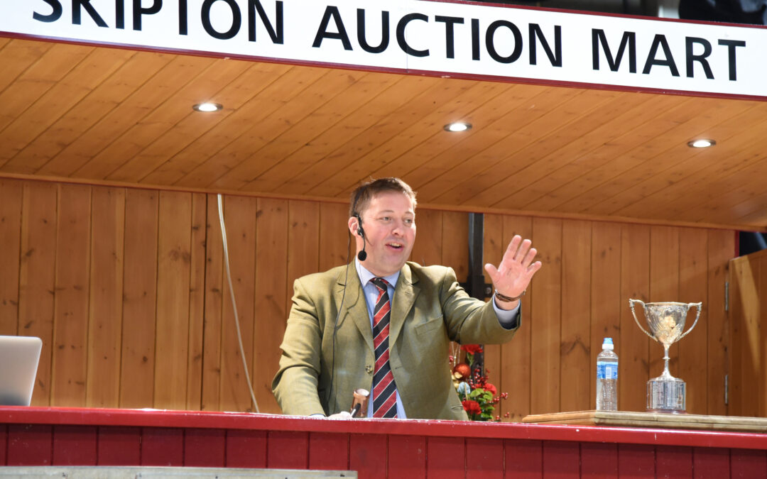 An Auctioneers Perspective- Suffolks, Ideally suited for early lamb production